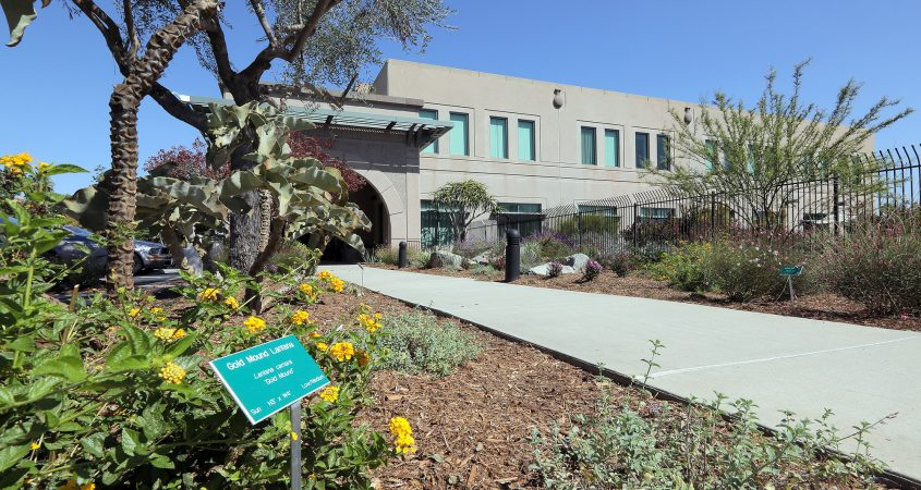 The San Diego County Water Authority's Sustainable Landscaping offers examples of plant choices for our region. Photo: SDCWA