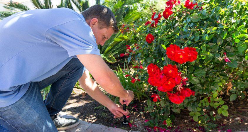 Flowers, WaterSmart checkup program