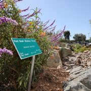 Choosing native plants can help you minimize the need for artificial irrigation of your San Diego County sustainable landscaping. Photo: SDCWA