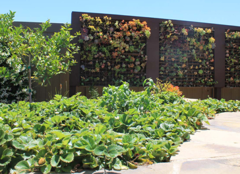 Carlsbad resident Munira Coomber's landscaping project wins the 2018 Watersmart Landscaping Contest. Photo: Courtesy Olivenhain MWD