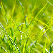 Let your grass grow longer in the summer. Photo: PhotoMix - Creative Commons License