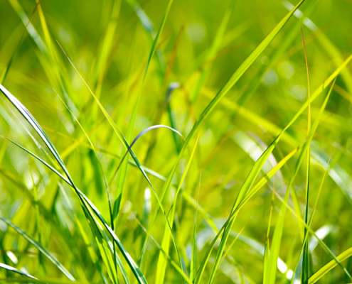 Love Your Lawn-Conservation Corner-Love your lawn organically