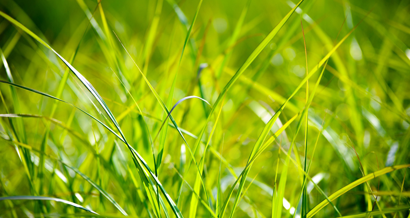 Let your grass grow longer in the summer. Photo: PhotoMix - Creative Commons License using water resources efficiently