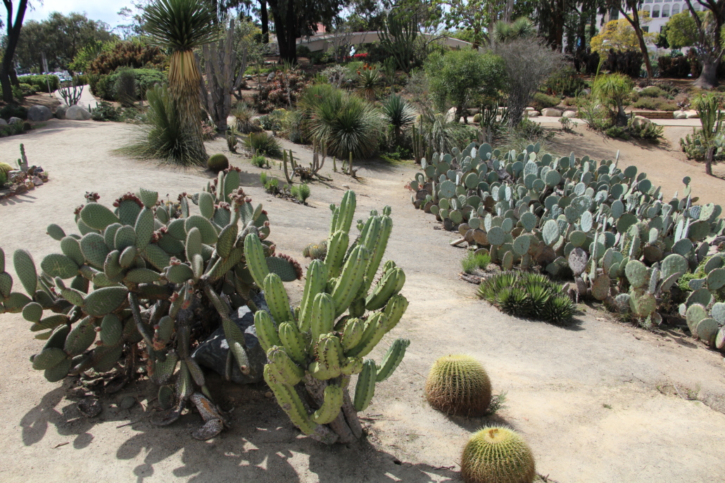 Balboa Park's cactus gardens are beautiful and diverse, and represent best practices in landscaping with plants that are native to this area. They need very little water to look great, and can provide ideas for low-maintenance, drought- resistant landscapes at homes and businesses in San Diego County. Photo: Balboa Park Cultural Partnership Balboa Park Sustainability