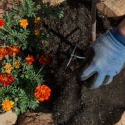 Your plant choices should be governed by the individual hydrozones in your landscaping. Photo: Kelly M. Grow/ California Department of Water Resources