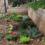Match Your Landscape Plants To Your Microclimates