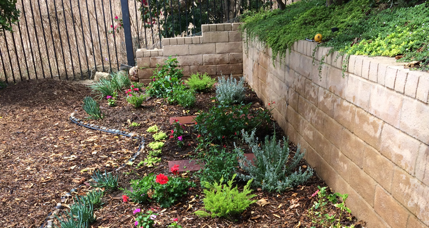 Match your plant choices to the different microclimate areas in your landscaping. A microclimate map helps you make good choices. Photo: Water Authority