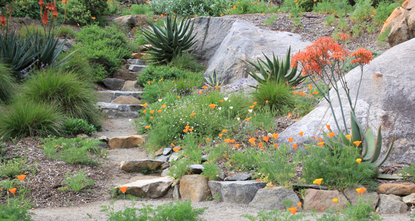 When Planting In Previously Disturbed Or Built Slopes And Hillsides, Low Water  Plants ...