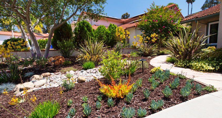 Homeowners learn through the Water Authority's Landscape Transformation program that sustainable landscaping can be as lush as a lawn. Photo Water Authority turf