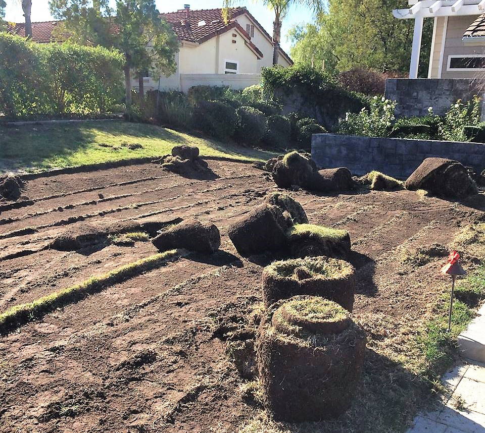 The Water Authority's Landscape Transformation Program teaches homeowners the proper methods for removing turf. Photo: Water Authority
