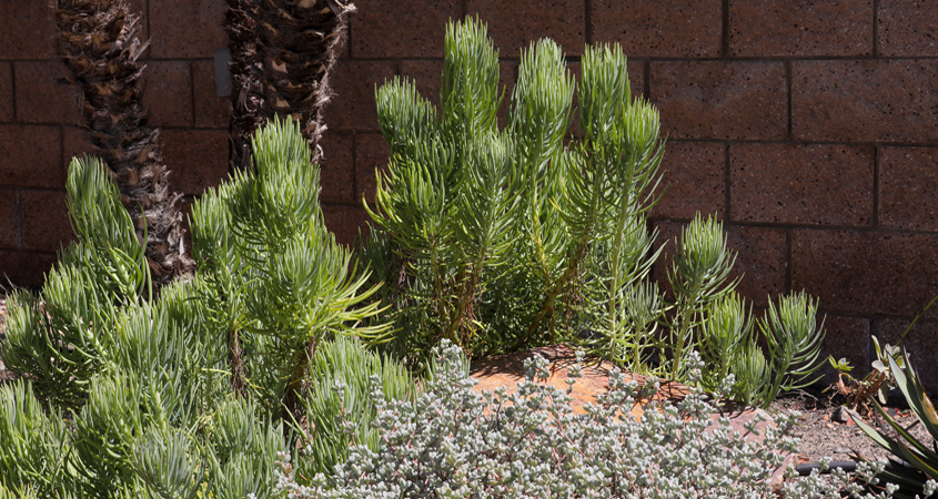 Learn to match plant choices to your microclimate map. Photo: Charlie Neuman, Water Authority