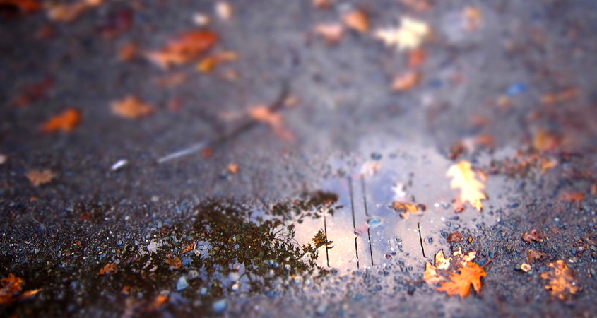 """The first rain after a dry period is called the """"first flush."""" It can wash pollutants off hard surfaces. A better alternative is to filter the first flush through your landscaping. Photo: Skyloader.Creative Commons"""