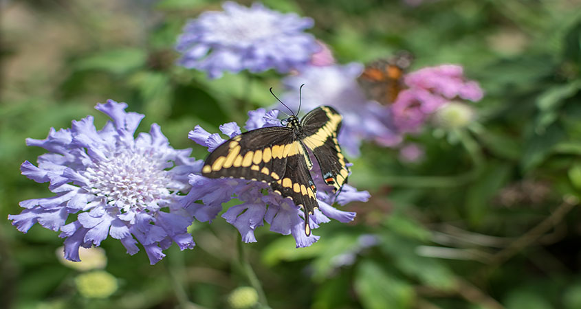 The Spring Garden and Butterfly Festival is one of the most popular events in East San Diego County.