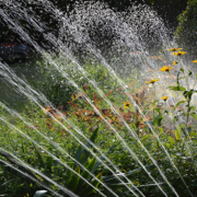 Reduce the amount of water your landscape needs with efficient irrigation. Photo: Peggy Choucair/Pixabay