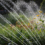 Irrigation Efficiency Impacts Plant Health and Water Use
