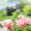 Top Irrigation Tips for Smart Landscape Management