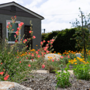 A colorful landscape full of native blooms is the 2019 Helix Water District Landscape Contest winner. Photo: Helix Water District Helix 2019 Landscape Contest