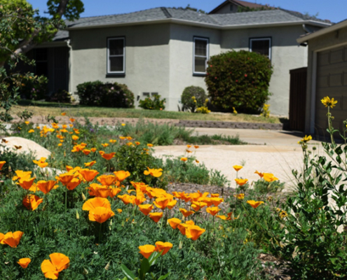 Even though the new landscaping is only four months old, it is already in full bloom with California native plants. Photo: Helix Water District