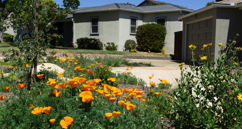 Native plants-New landscaping-room to grow-plants-Conservation Corner