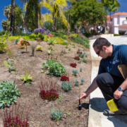 Professionals trained in different aspects of sustainable landscaping can help you ensure the success of your project. Photo: Water Authority