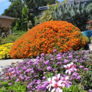 Janet and Conrad Becks' winning design came from their desire to save water and to showcase their makeover. Photo: City of Oceanside drought tolerant gardens