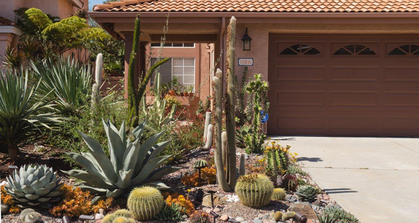 Homeowner Gerald Wharton was inspired to bring back livable habitat for native flora and fauna when creating his drought tolerant garden. Photo: City of Oceanside drought tolerant gardens