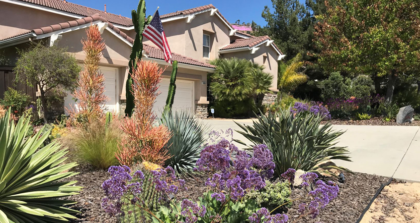 By showcasing her water-wise landscape, Brandt is providing other homeowners with great ideas about how to make their yards attractive and use less water. Photo: Vista Irrigation District Winning Vista Irrigtion District