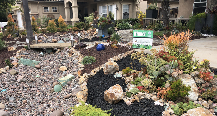 Landscape Makeover-Sweetwater Authority-Water Conservation-native plants