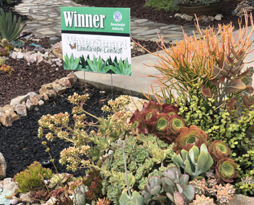 A diverse palette of colorful succulents, cacti, and California native plants add to the winning design. Photo: Sweetwater Authority