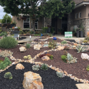 Planning for the amount of space your new plants will need when fully grown will help your landscape thrive. Photo: Sweetwater Authority