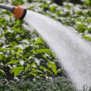 San Diego County Water Authority Special Agricultural Water Rate program