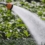 New Agricultural Water Rate Program Benefits San Diego County Growers