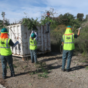Murray Reservoir environment projects - City of San Diego