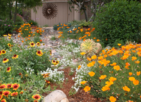 Native plants can add beautiful color to your sustainable landscape, while attracting pollinators like hummingbirds and butterflies. Image: Water Authority
