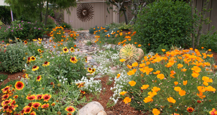 Native plant-sustainability-garden-landscapetracting pollinators like hummingbirds and butterflies. Image: Water Authority
