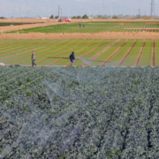 Imperial Valley farming-Holtville-coronavirus-WNN-2020