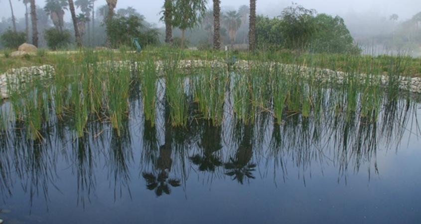 IRWM - SD Wild Animal Park Biofiltration Wetland