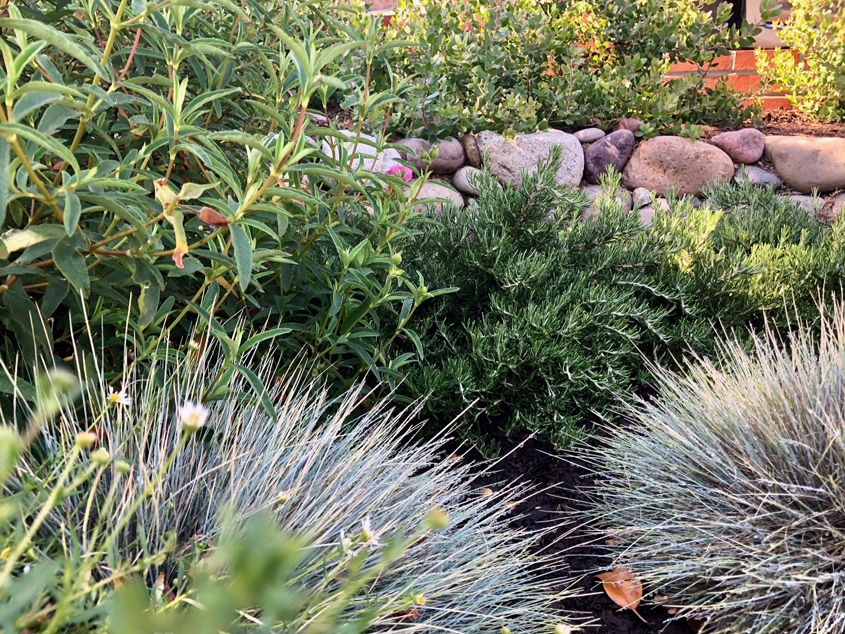 The Montgomerys worked with a landscape designer who helped create a hardscape layout, irrigation design, and planting plan featuring low-maintenance plants. Photo: Helix Water District