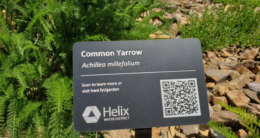 Helix Water District, WaterSmart, demonstration garden