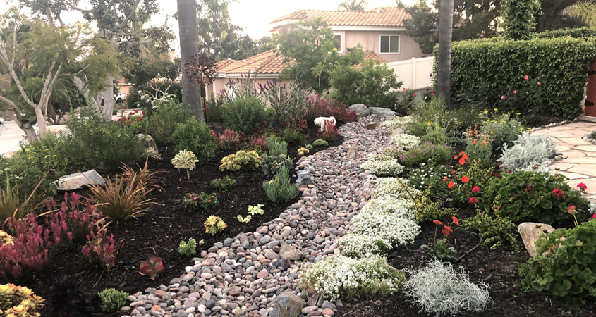The Zeigler family of Vista replaced a labor intensive lawn with a beautiful pollinator friendly landscape to win the 2020 VID Landscape Makeover Contest. Photo: Vista Irrigation District