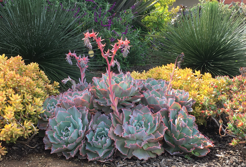Waterwise plant choices don't have to be boring. Photo: City of Escondido