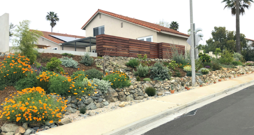 The winning landscape was inspired by diverse San Diego County ecosystems and features a variety of native and low-water-use plants including California Poppy and Pink Rockrose. Photo: Olivenhain Municipal Water District