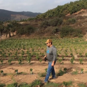 San Marcos coffee farmer Kyle Rosa walks through his 2.5 acre property. Photo: Vallecitos Water District