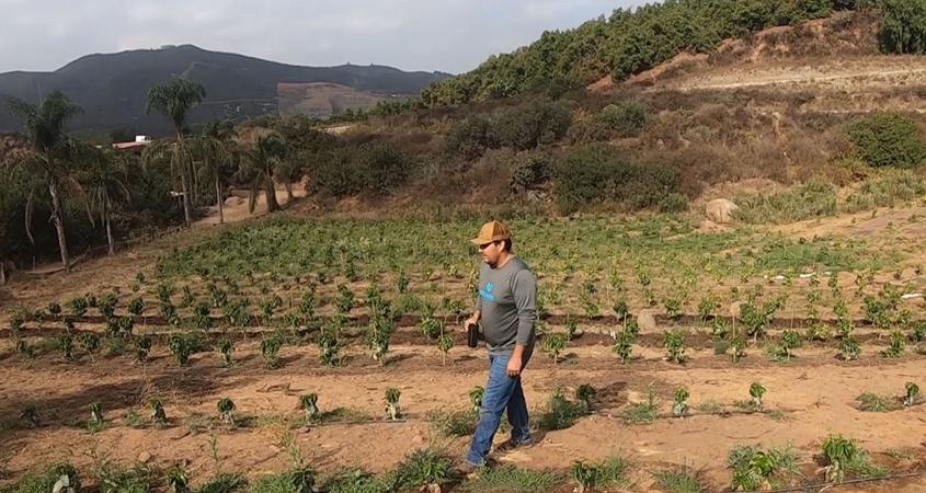 San Marcos coffee farmer Kyle Rosa walks through his 2.5 acre property. Photo: Vallecitos Water District