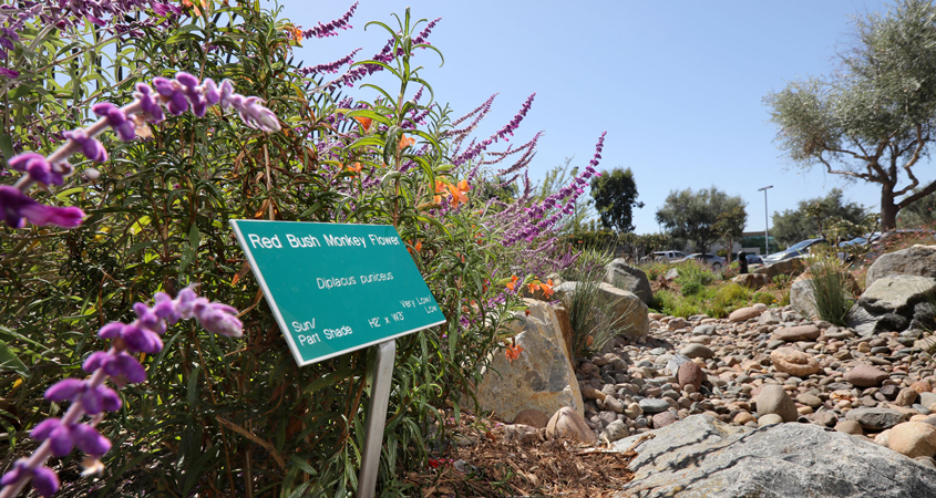 The four principles of sustainable landscaping are on display at the San Diego County Water Authority's Sustainable Landscaping Demonstration Garden outside its headquarters in the Kearny Mesa area of San Diego. Photo: Water Authority