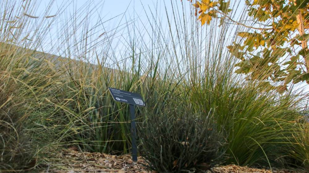 Helix Water District-Landscape-WaterSmart-Grasses