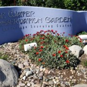 Water Conservation Garden-#FreeDayFriday-conservation