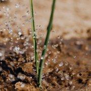 Irrigation-Soil-roots-Conservation Corner your plants, use a soil probe. Photo: Karolina Grabowska/Pexels soil probe tips