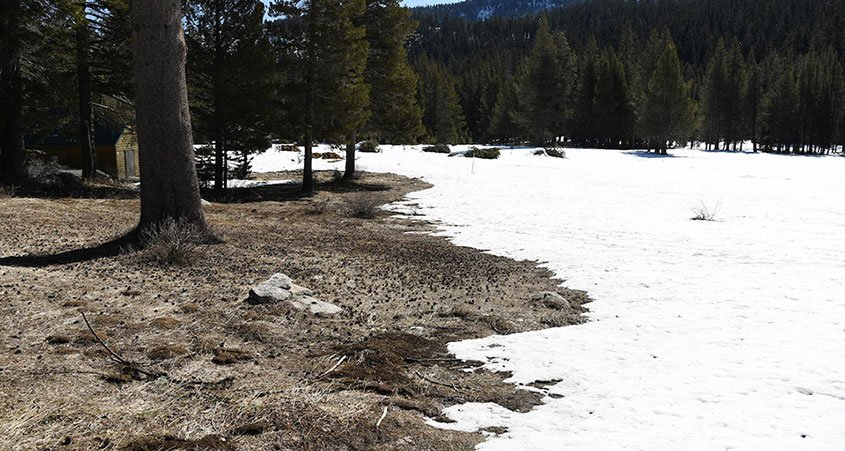 Phillips Station-Mountain Snowpack-Climate Change-DWR Snow Survey
