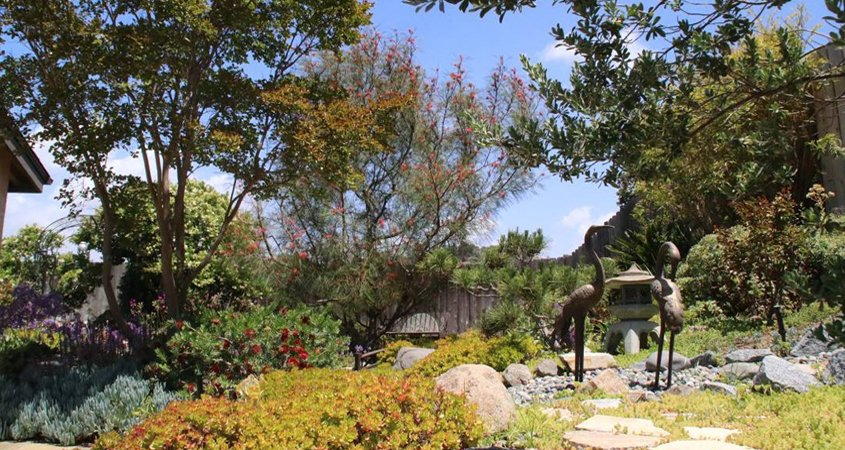 Even the strictest drought restrictions allow for watering trees on residential and commercial properties. Photo: Helix Water District tree care tips